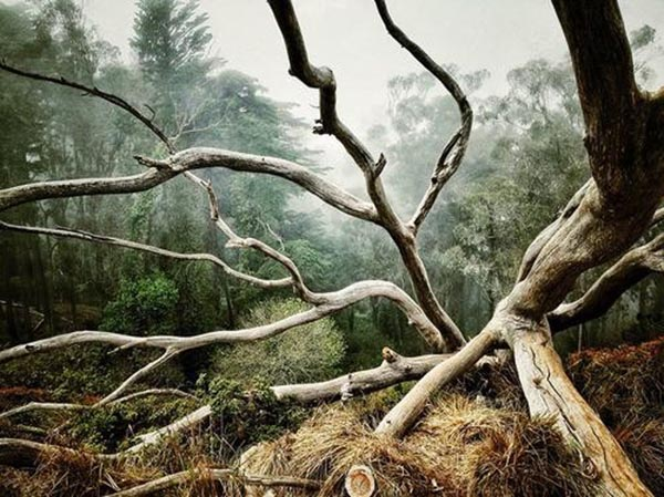 Best Photograph of Trees –  Aaron Pike